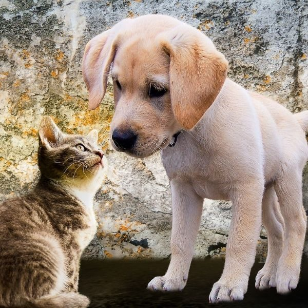 Animal Healing Workshop - Level 1
